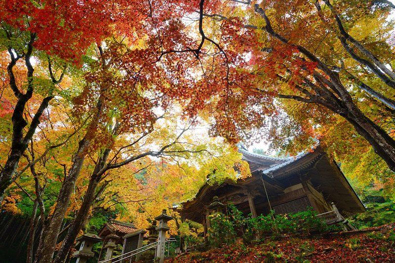 2016京都の紅葉@八木 西光寺_f0032011_18134399.jpg
