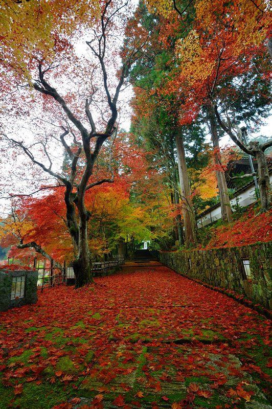 2016京都の紅葉@亀岡 苗秀寺_f0032011_19212838.jpg