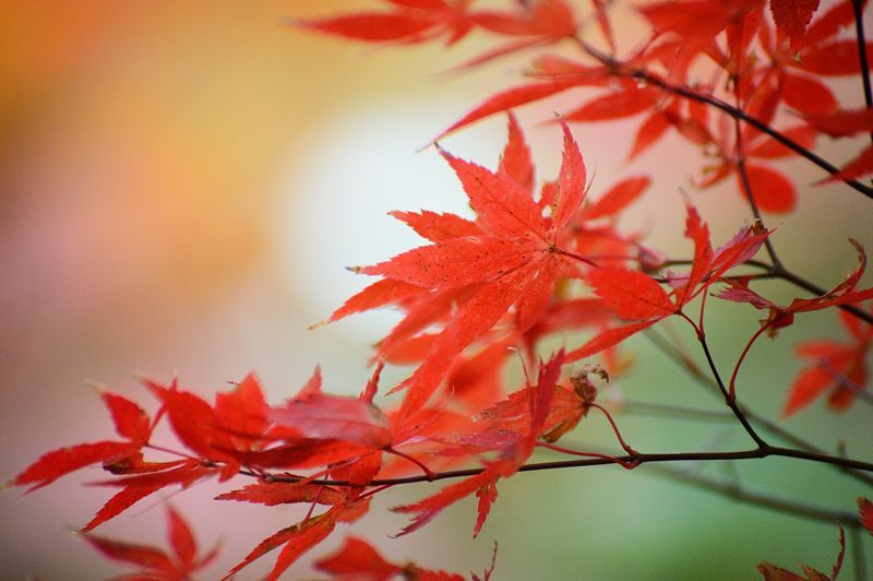 2016京都の紅葉@亀岡 苗秀寺_f0032011_19212944.jpg