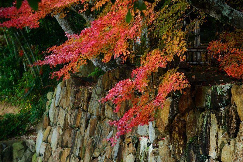 2016京都の紅葉@亀岡 苗秀寺_f0032011_19212980.jpg