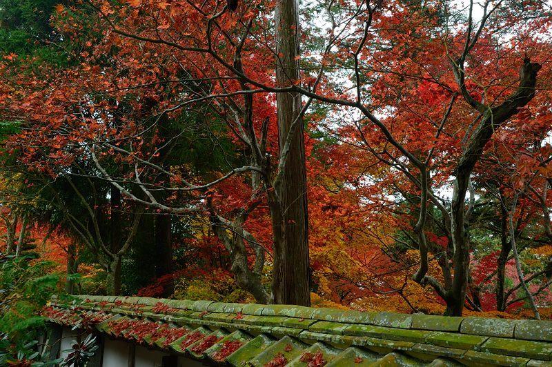 2016京都の紅葉@亀岡 苗秀寺_f0032011_19285896.jpg