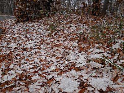 11月23日  水曜 小雪  0度_f0210811_170772.jpg