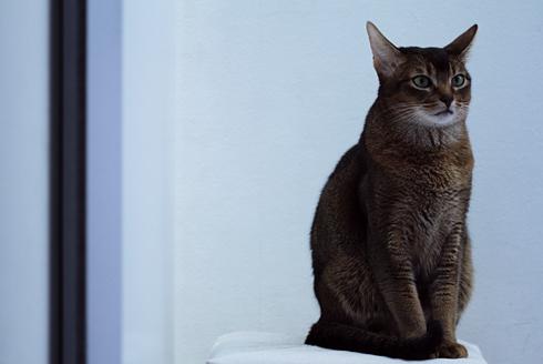 [猫的]チョイ膨らんでます_e0090124_23092569.jpg