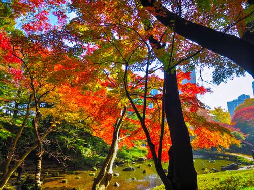 2016.11.22小石川後楽園の紅葉_e0321032_23381674.jpg