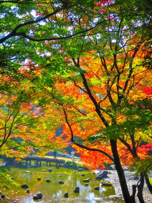 2016.11.22小石川後楽園の紅葉_e0321032_23393014.jpg