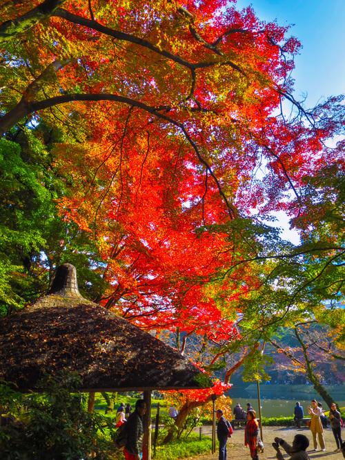 2016.11.22小石川後楽園の紅葉_e0321032_23401091.jpg