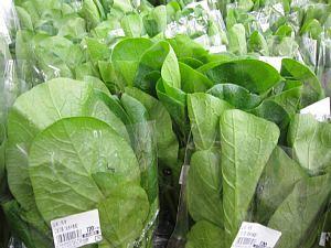 本日の葉物野菜_c0141652_12453645.jpg