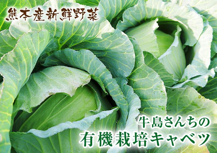 有機栽培キャベツ 定植後の様子とその後の成長_a0254656_19254590.jpg