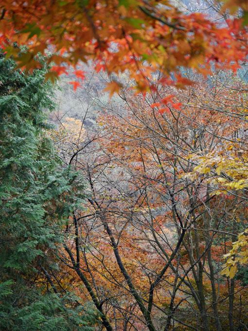 「森林探訪会」に参加、深秋の丹沢の紅葉を満喫11・20_c0014967_5522516.jpg