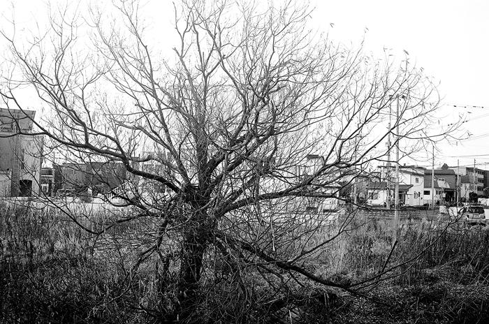 冬の枝と青森師団自衛隊員の命_c0182775_1647101.jpg