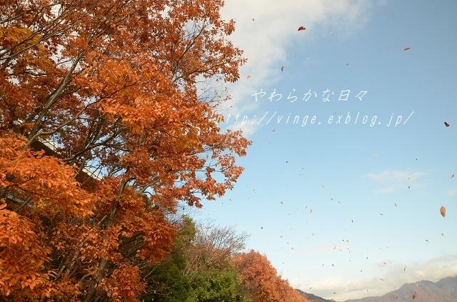 落ち葉は雪に~_a0158478_13501467.jpg