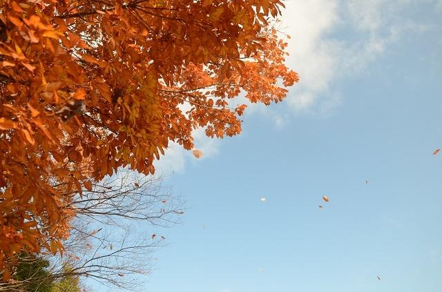 落ち葉は雪に~_a0158478_14001088.jpg