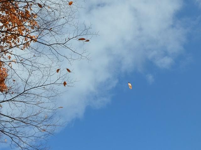 落ち葉は雪に~_a0158478_14042832.jpg