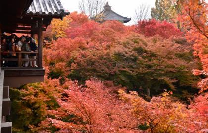 11月に入り紅葉撮影の最後は毎年のように.....京都への...._b0194185_22524719.jpg