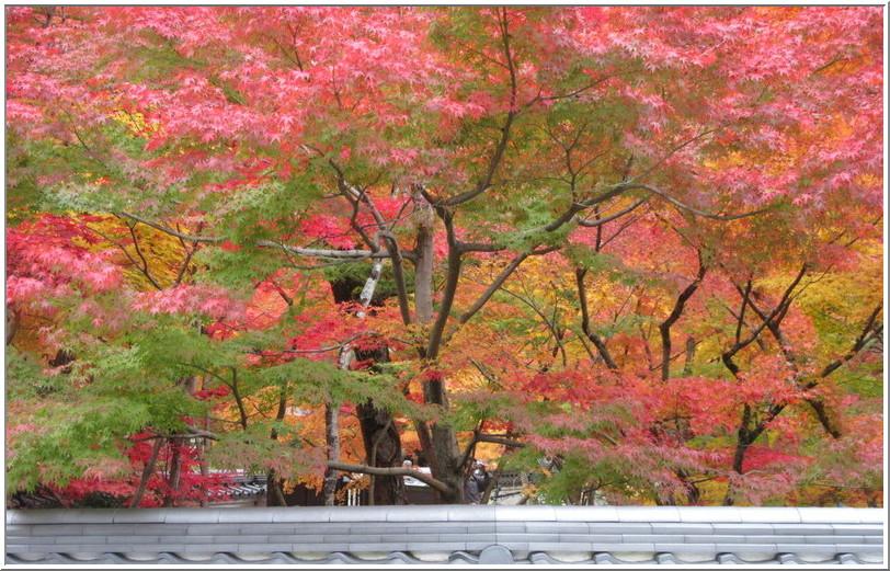 南禅寺からぶらぶら、永観堂の紅葉_b0104092_10461242.jpg