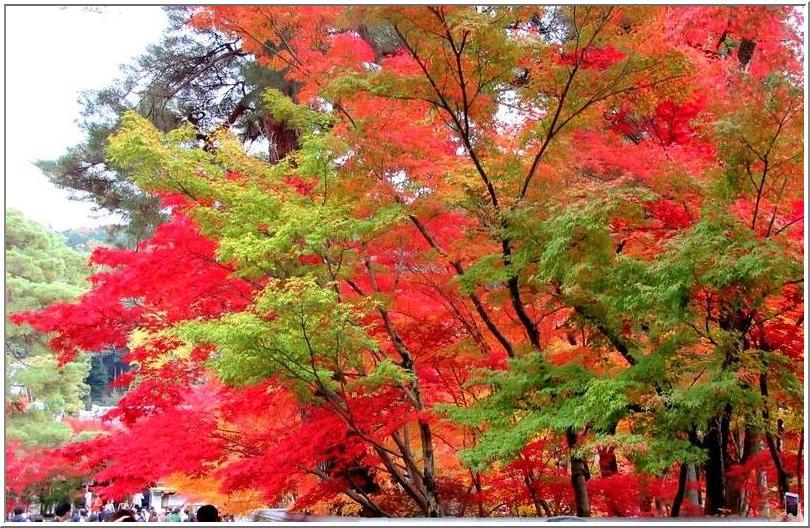 南禅寺からぶらぶら、永観堂の紅葉_b0104092_10465253.jpg