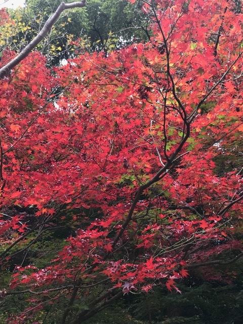 須磨離宮公園_f0204295_19373979.jpg