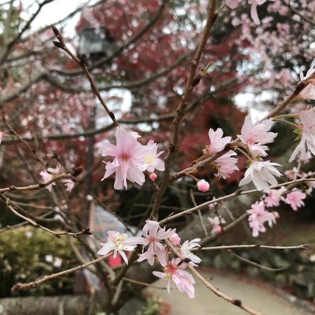 須磨離宮公園_f0204295_19400825.jpg