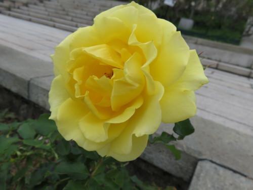 須磨離宮公園_f0204295_19440720.jpg