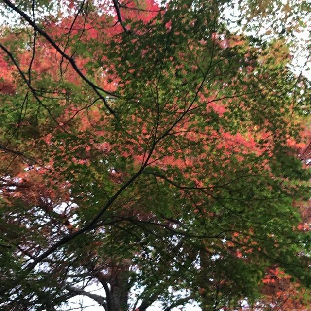 須磨離宮公園_f0204295_19530667.jpg