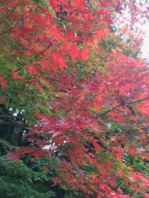 須磨離宮公園_f0204295_19584468.jpg