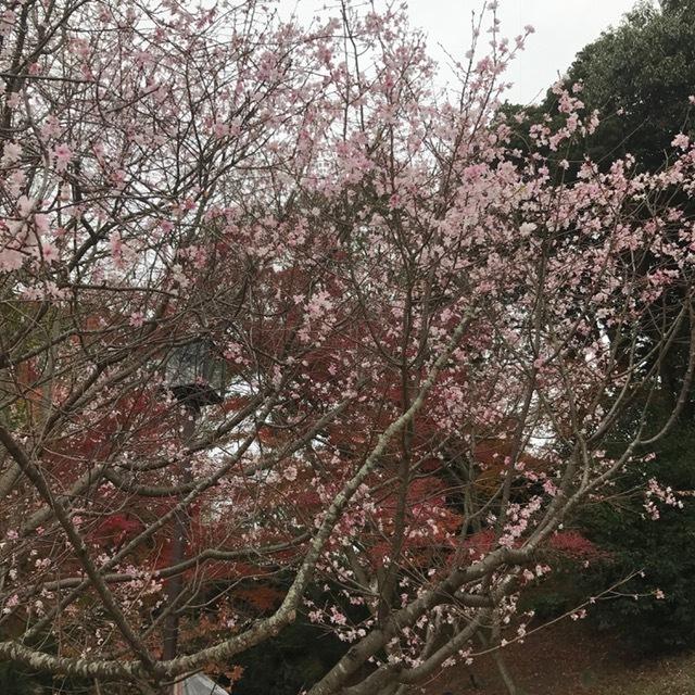 須磨離宮公園_f0204295_20351217.jpg