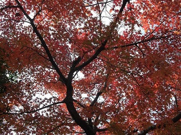 秋、たいやき_e0008704_8252331.jpg