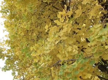 秋、たいやき_e0008704_8254242.jpg