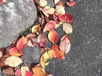 秋、たいやき_e0008704_826347.jpg