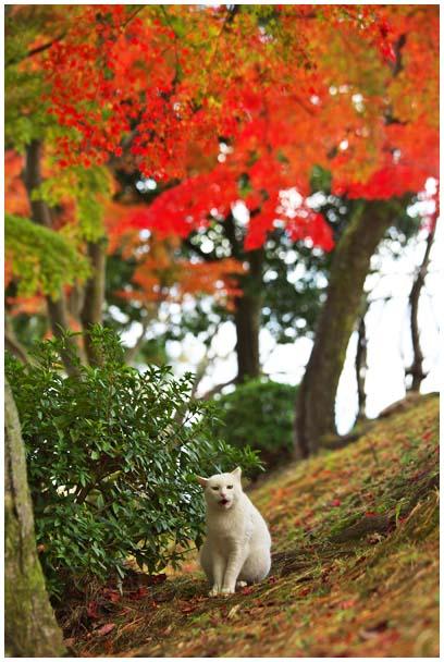 姫山公園の紅葉_d0272207_1971518.jpg
