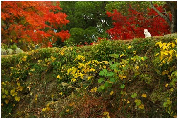姫山公園の紅葉_d0272207_1972376.jpg