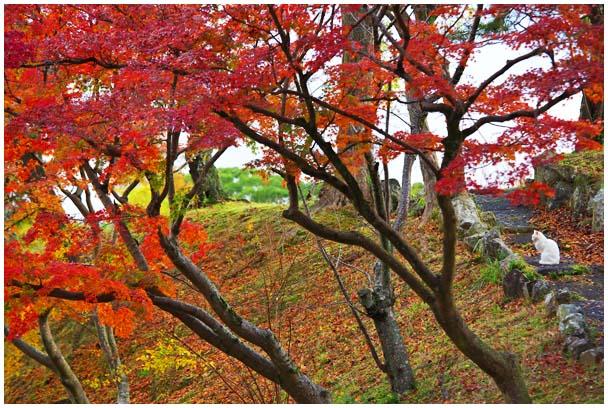 姫山公園の紅葉_d0272207_197314.jpg