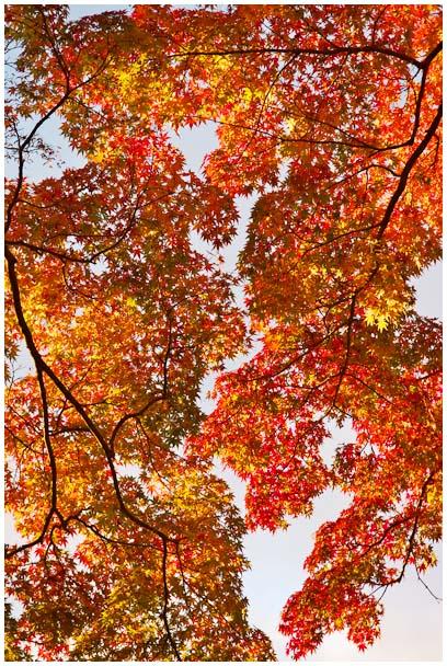 姫山公園の紅葉_d0272207_1973748.jpg
