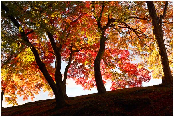 姫山公園の紅葉_d0272207_197728.jpg