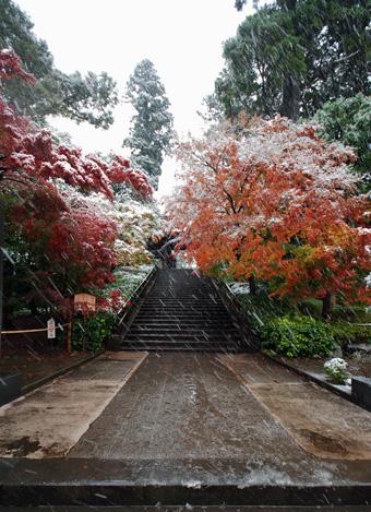 円覚寺の紅葉に雪_c0195909_1053063.jpg