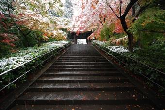 円覚寺の紅葉に雪_c0195909_1053463.jpg