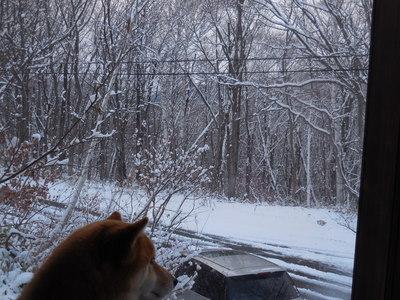 11月24日 木曜  雪  -2度_f0210811_16212619.jpg