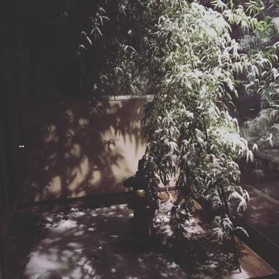 初雪となりました_e0192217_05374633.jpg