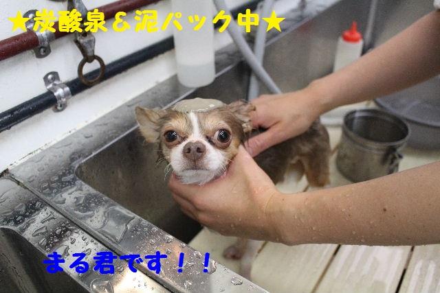 雪って怖いのねぇ~・・・_b0130018_1435597.jpg