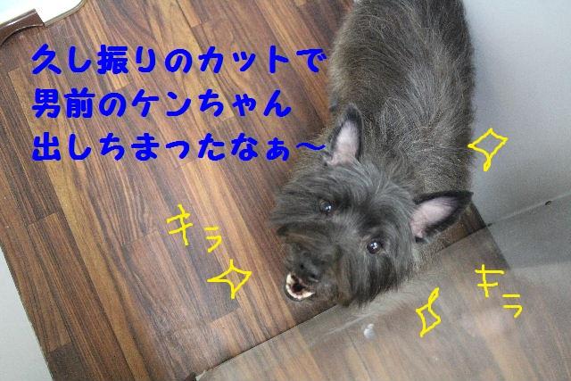 雪って怖いのねぇ~・・・_b0130018_15124721.jpg