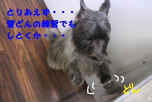 雪って怖いのねぇ~・・・_b0130018_15125486.jpg