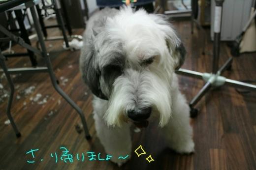 お鍋-!_b0130018_20565545.jpg