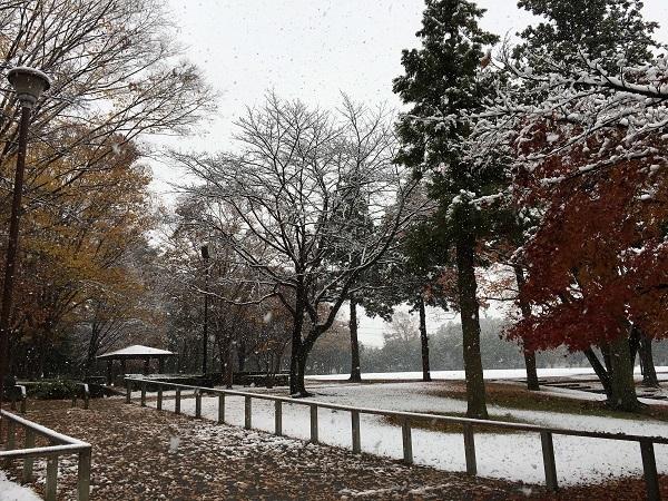 まさかの雪景色_b0100229_12323331.jpg