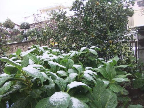 初雪に..驚き!_b0137932_1631588.jpg