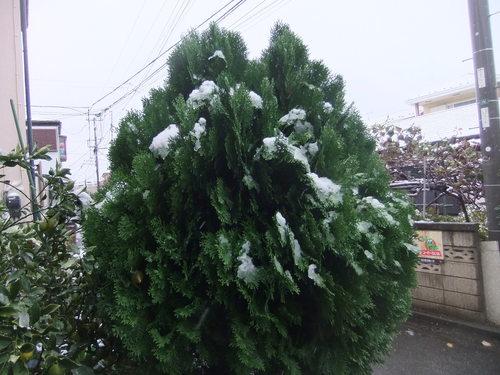 初雪に..驚き!_b0137932_16323973.jpg