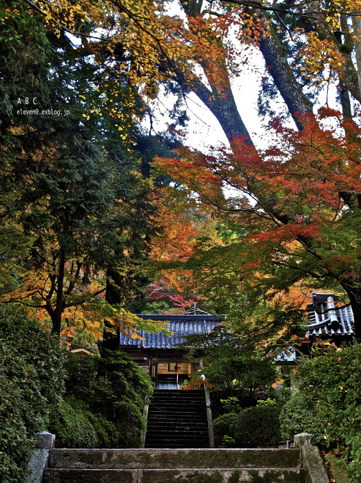 熊野神社_f0315034_12432719.jpg