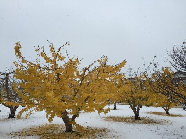 初雪の便り_a0103940_20024254.jpg