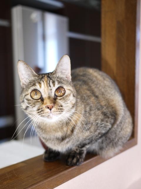 猫のお留守番 天ちゃん編。_a0143140_20253481.jpg