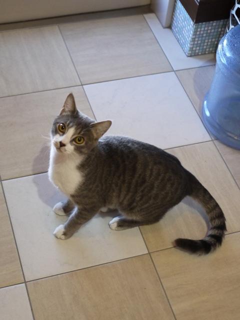 猫のお留守番 麦くん編。_a0143140_20283969.jpg