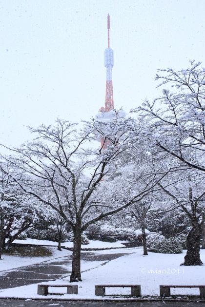初雪を撮りに ~八幡山公園~_e0227942_22325811.jpg
